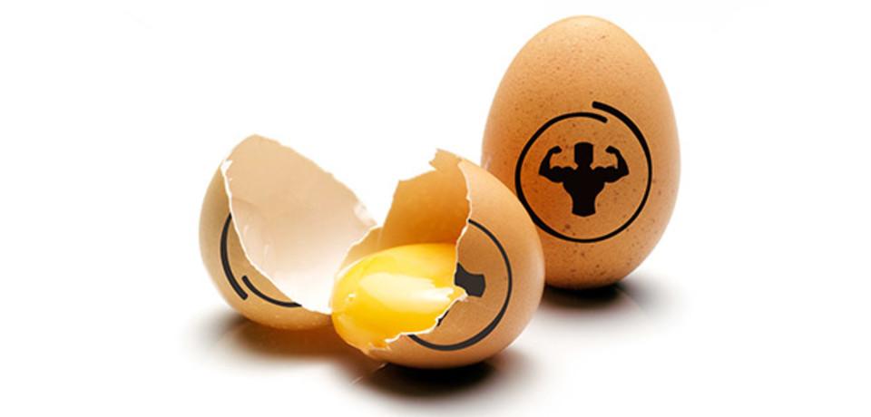 عضله سازی با تخم مرغ